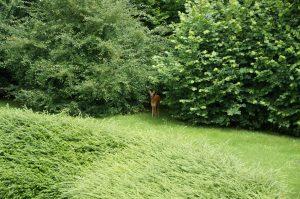 Ein Reh in der Nähe des Schlossparks Bochum