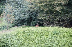 Reh in der Nähe des Schlossparks Bochum