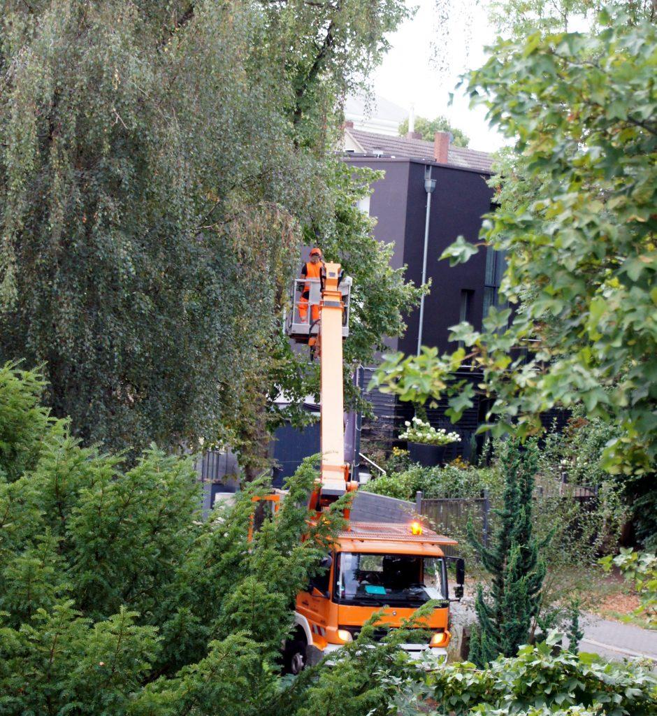 Baumfällarbeiten Schloßstraße Bochum