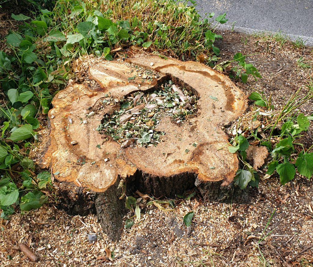 Stamm des gefällten Baumes (schloßstraße Bochum)