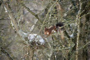 Eichhörnchen am Schlosspark Bochum